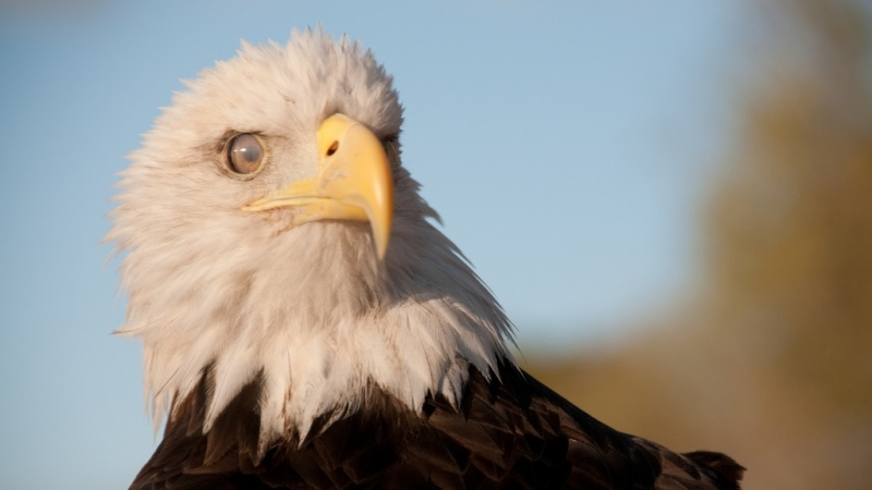 a close-up of an eagle